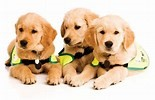 Guide Dogs and your venue